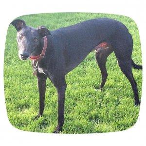 Bristol DAWG (Greyhound & Lurcher Rescue) to return in-centre